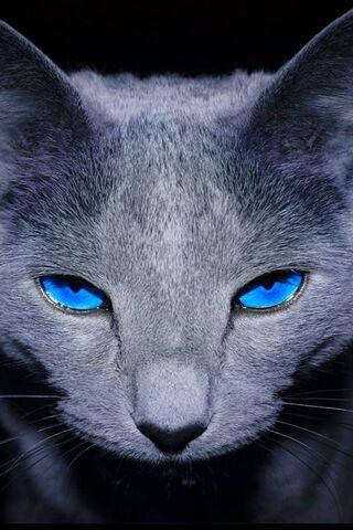 Cat Mata Biru