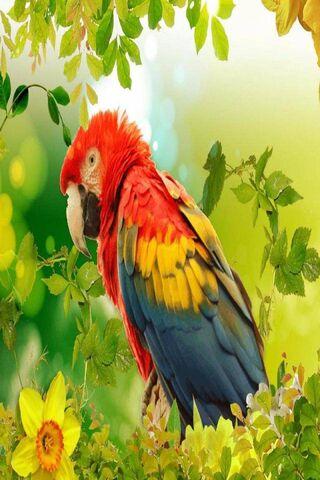 Macaw Parrot Bird