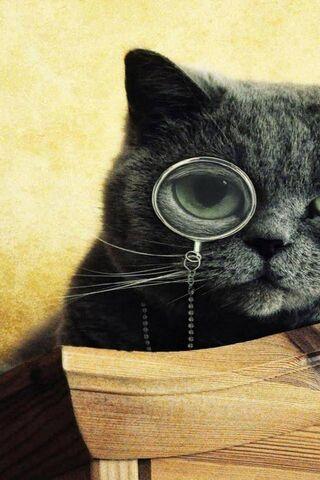 Cat-Monocle