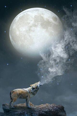 Wilk w pełni księżyca