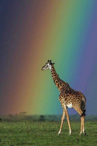 আফ্রিকা