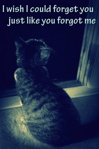 You Forgot Me Cat