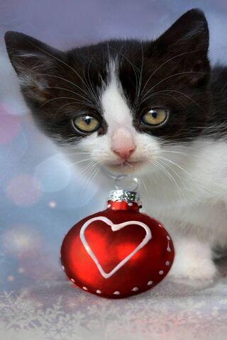 Kot i Boże Narodzenie