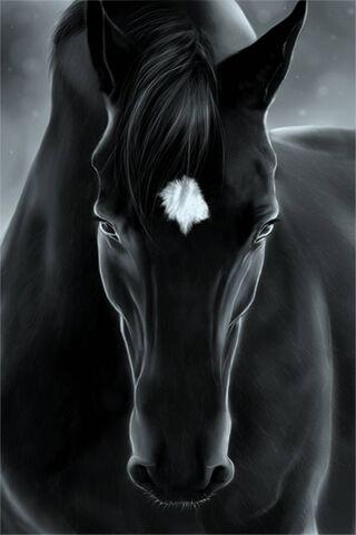 काळ्या घोडा