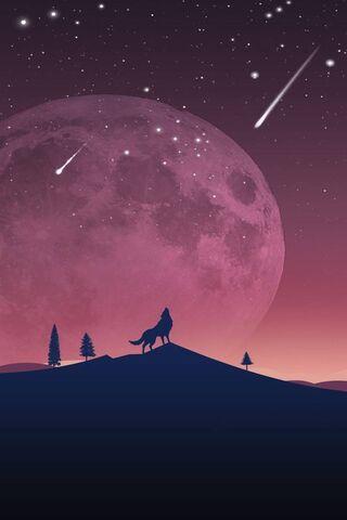 Pek Wolf Malam