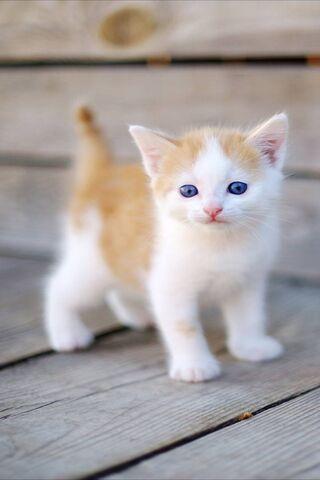 Kitten Sweet
