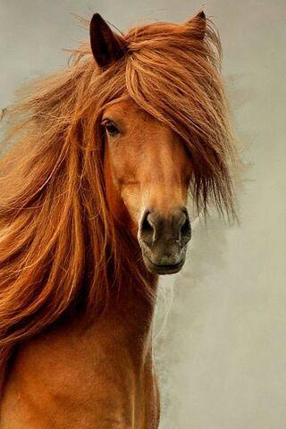 Kecantikan Kuda