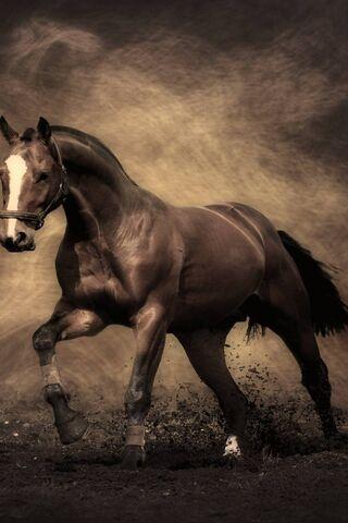 Kuda hd