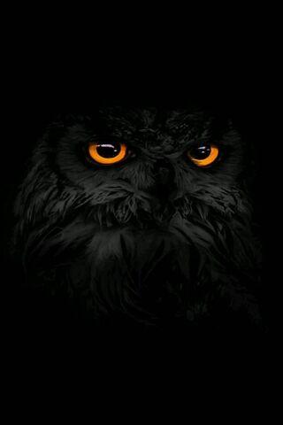 Черные совы