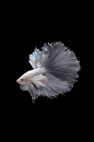 Fighter Fish 3