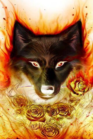 Loup de feu