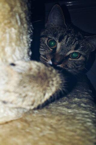 भूरी बिल्ली
