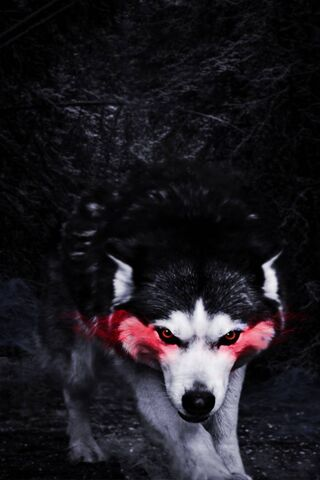 Red Effect Wolf
