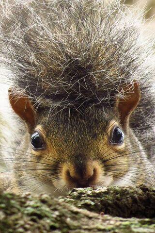 Ritratto di scoiattolo
