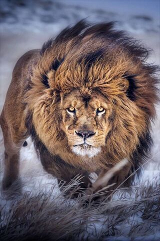 The King Of Jungle