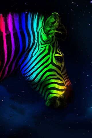 Rainbow Zebra Print Wallpaper Download To Your Mobile From