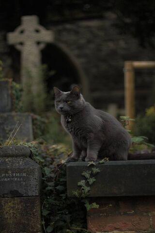 Gatto Nel Cimitero