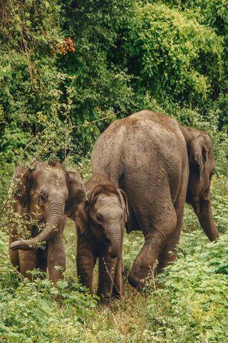 ครอบครัวช้าง