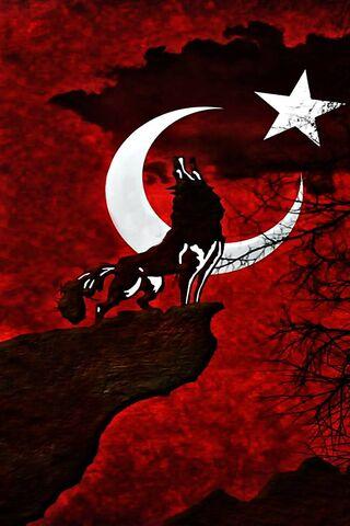 Lobo da Bandeira da Turquia