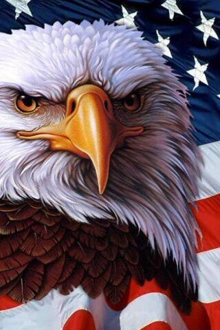 Aigle Americain Fond D Ecran Telecharger Sur Votre Mobile Depuis Phoneky