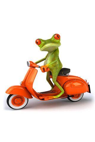 Moto Frog