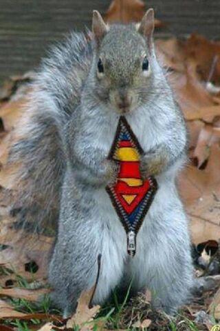 슈퍼맨 다람쥐
