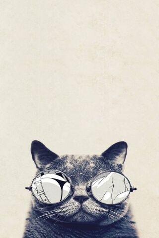 Kucing Hipster