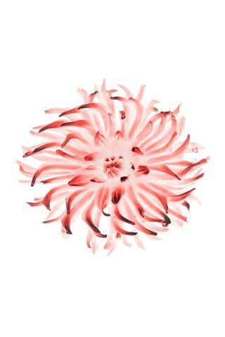 Iphone फूल