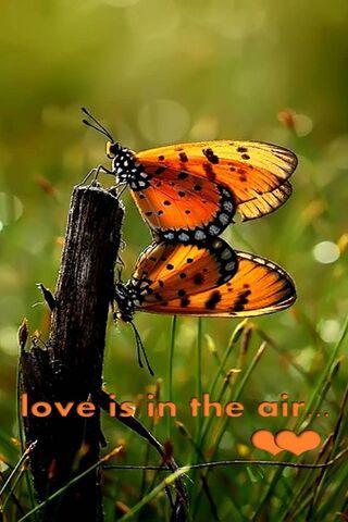 Aşk, havadadır