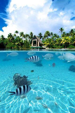 Tropikal cennet
