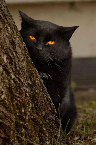 Czarny zwierzak