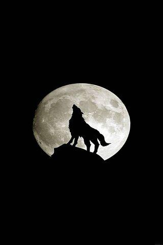 Wolf-Animal-Dark