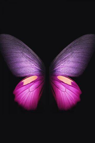 Pink Butterfly 4k
