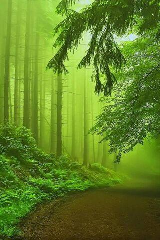 Forest Fog Green