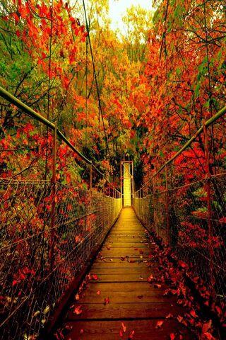 Jembatan Hutan Musim Gugur