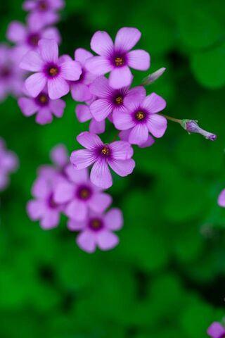 सुंदर फूल