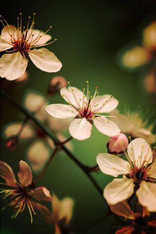 Fleur blanc rosé