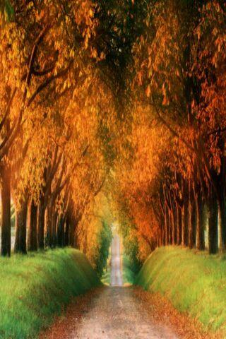 शरद ऋतु सड़क प्रकृति