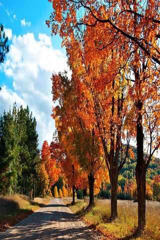 शरद ऋतु वन