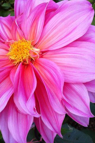 फूल फ्लावू