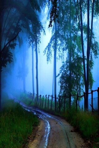 Blue Mist In Forest