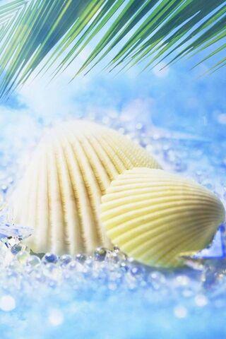 Shells Hd