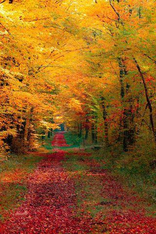 Hutan Musim Gugur