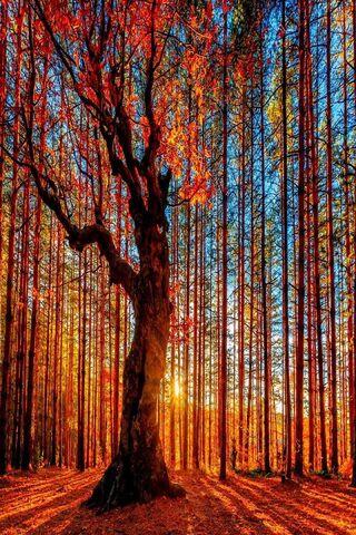 Pohon Hutan Musim Gugur