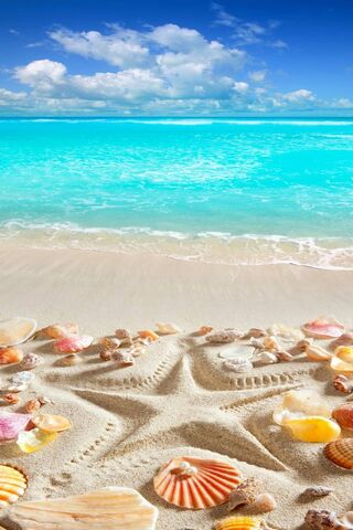 شاطئ الاستوائية