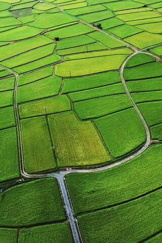 Vast Green Field