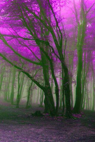 बैंगनी वन
