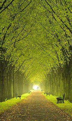 أشجار جميلة الخلفية تحميل إلى هاتفك النقال من Phoneky