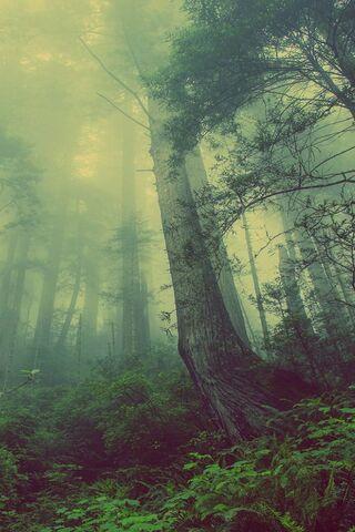 एकाकी वन