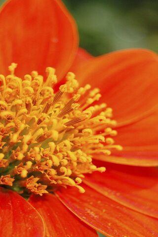 오렌지 매크로 꽃
